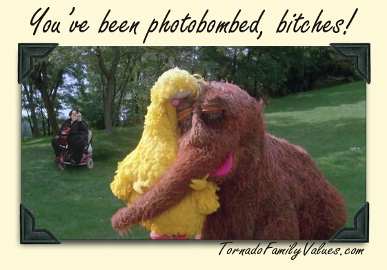 photobombed bigbird